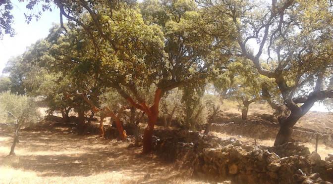 Korkeichen, Geier und Wassermangel im Grenzgebiet